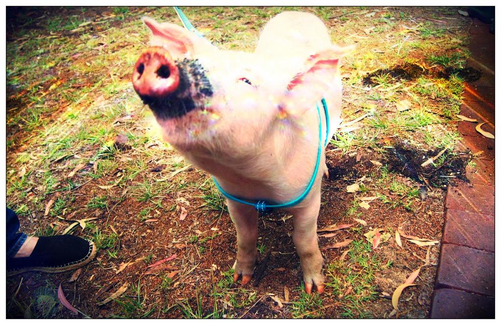 Cruelty-Free Festival WA 2012