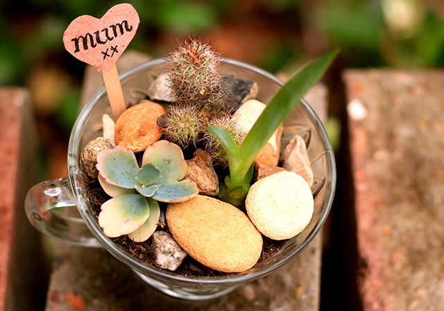 Mini succulent gardens by The Little Green House