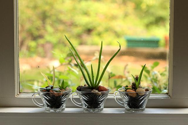 Mini succulent gardens by She Makes Magic
